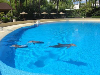 Dolphin Habitat.