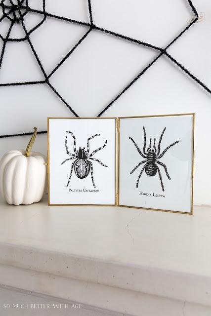 Spooky Spider Halloween Printables