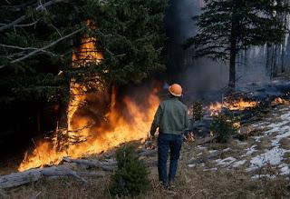 Dampak Kebakaran Hutan Terhadap Alam
