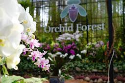 Orchid Forest Cikole Wisata Edukasi Dengan Foto Spot Yang Indah