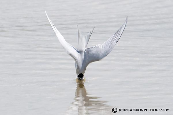John Gordon/Listening to Birds: Western Road Trip Part 7