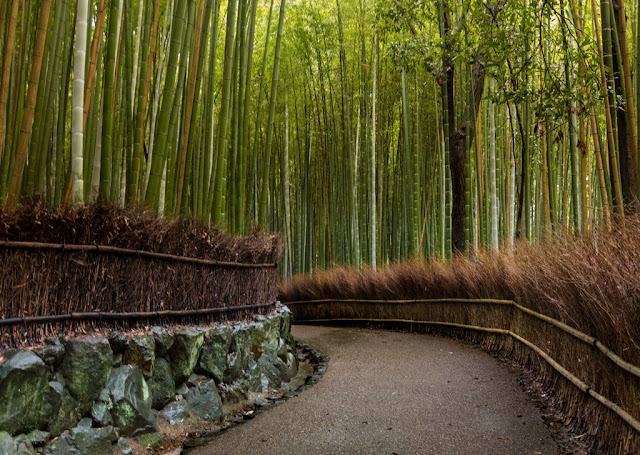 Bosque de bamboo de Arashiyama :: Canon EOS5D MkIII   ISO3200   Canon 24-105@35mm   f/4.0   1/25s