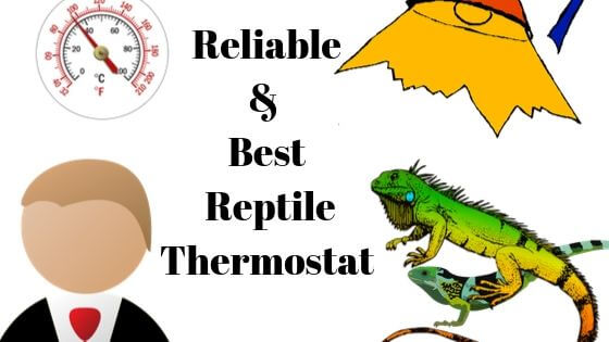 Top 9 Reliable Reptile Thermostats for Heaters