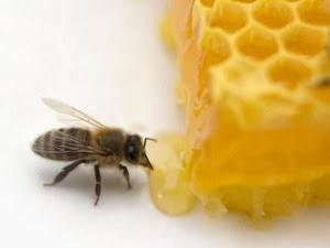 Mật ong chữa viêm loét dạ dày