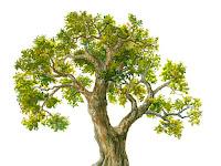 Simak Cara Tepat Lolos Tes Psikotes Gambar Pohon Dengan Cepat