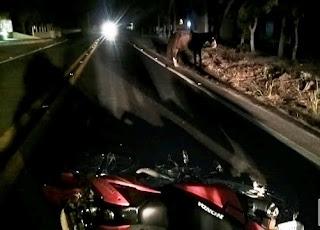 3 pessoas ficam feridas entre Jaçanã e Nova Floresta após moto bater em cavalo