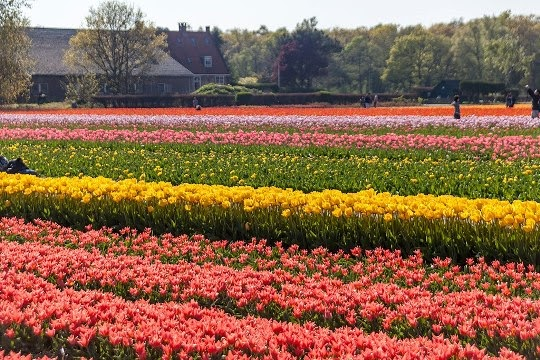 Lisse, Belanda