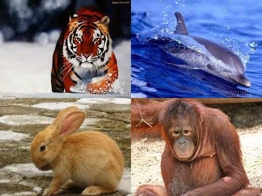 Jenis Hewan Omnivore Dan Kelas Mamalia