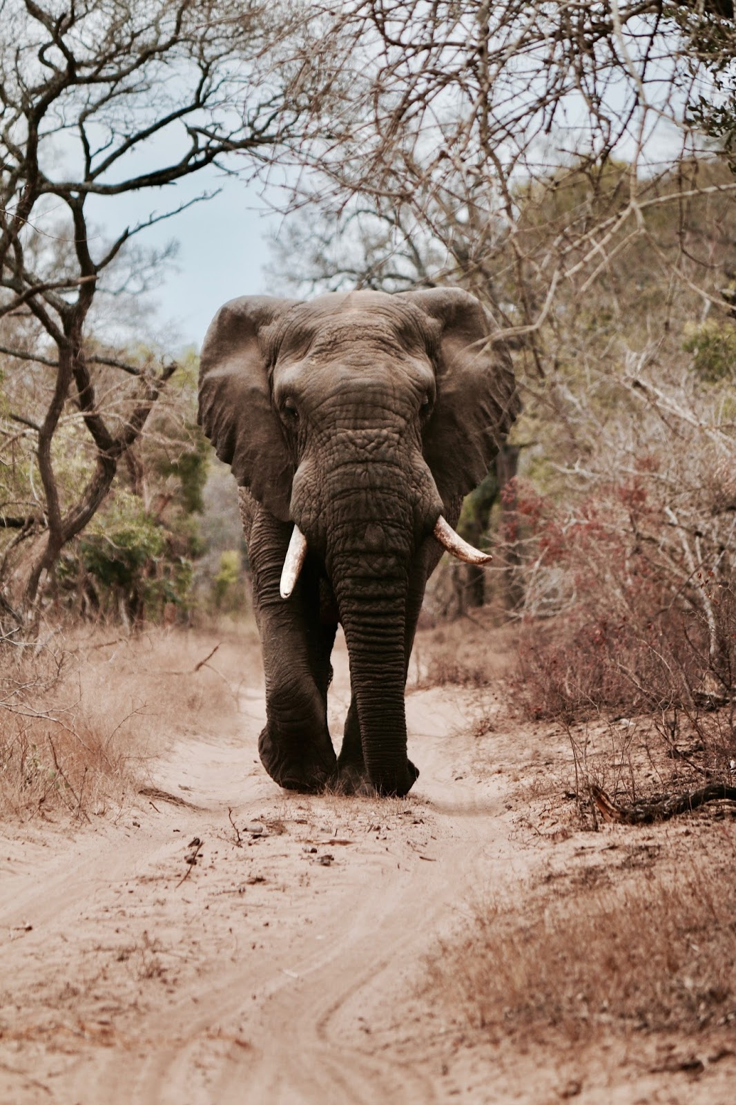 Picture of an elephant.