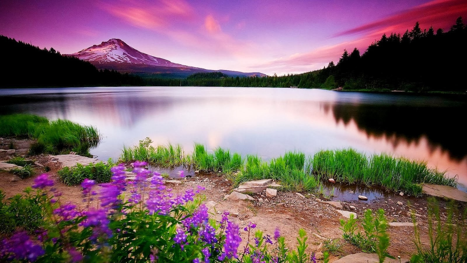 Full HD Size Nature Wallpapers Free Downloads | Full HD Nature Wallpapers