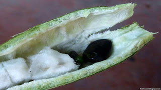 Ice cream bean fruit images wallpaper