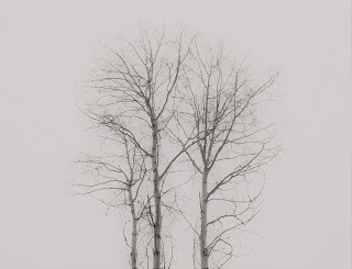 Chilcotin frozen trees