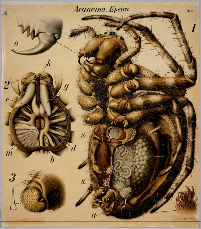 Are Parts Insects What 3