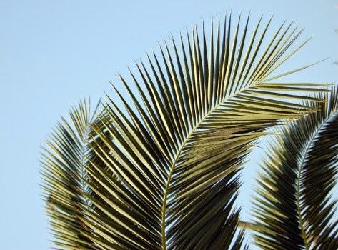 D gianni mazzali sdb benedetto colui che viene nel nome - Colorazione pagine palma domenica ...