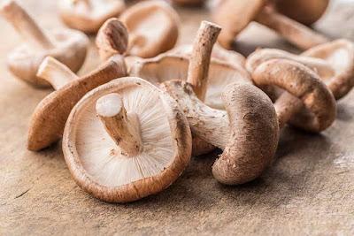 Shittake Mushroom Growing