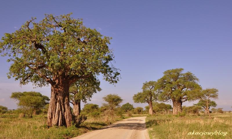 Powitanie z Afryką. Dom Karen Blixen w Nairobi.