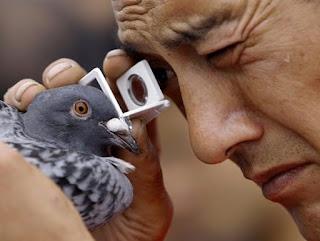 güvercin gözü