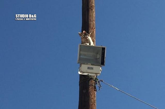 """Επιχείρηση """"γατάκια"""" για την πυροσβεστική Ναυπλίου (βίντεο)"""