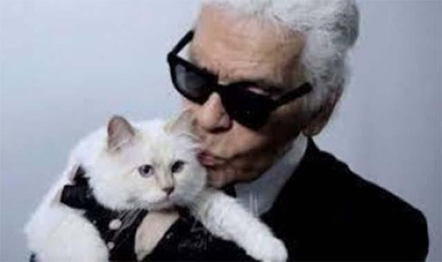 حكاية أغني قطة في العالم