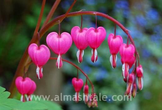 اجمل الزهور في العالم