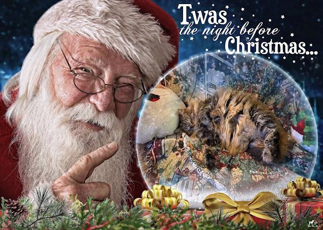 Matilda Christmas Eve 2020 (©Jenny Bell @ Bell Fur Zoo)