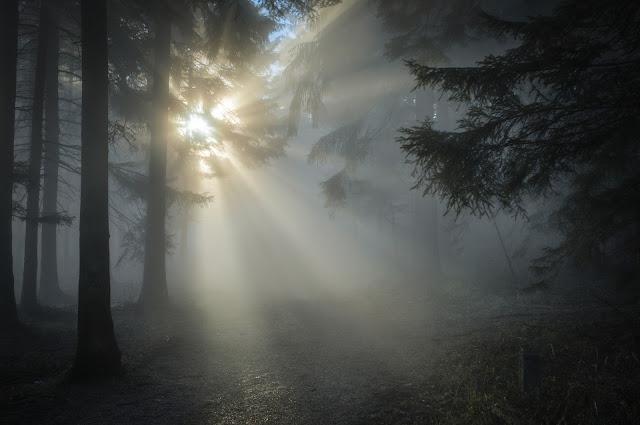 أجمل سقوط لاشعة الشمس وسط الاشجار خلفيات مناظر طبيعية