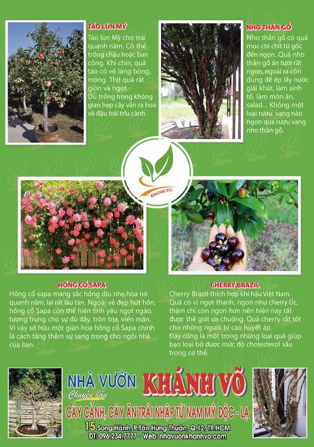 Chọn cây cảnh ngày tết thế nào cho may mắn cả năm Nha-vuon-khanh-vo
