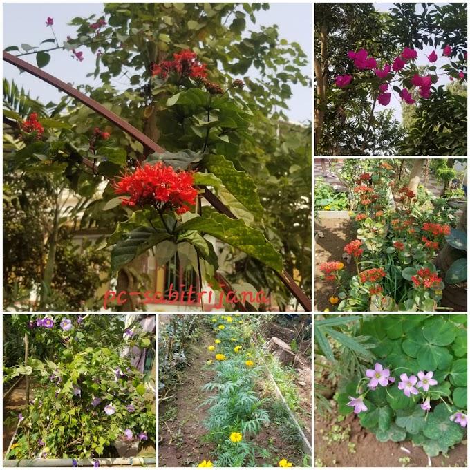 বুড়িমার পাগলভিলা  || সাবিত্রী জানা ষন্নিগ্রহী