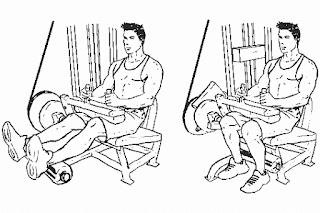 3. Seated Leg Curl