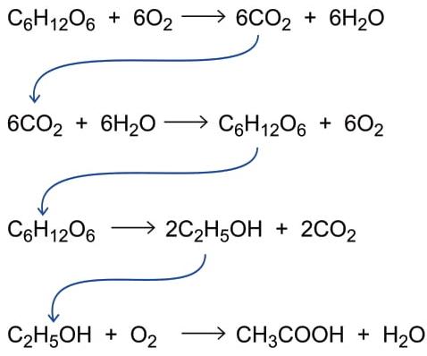 As equações das reações químicas a seguir remetem a processos biológicos que convertem compostos de carbono.