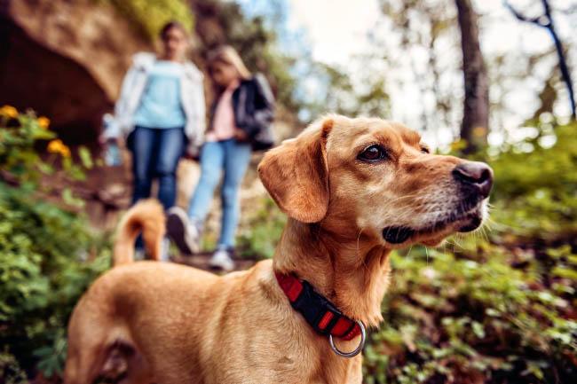 Jak zadbać o bezpieczństwo psa na spacerze w lesie?