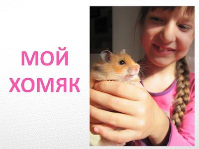 "презентация ""Мой домашний питомец"" о хомячке"