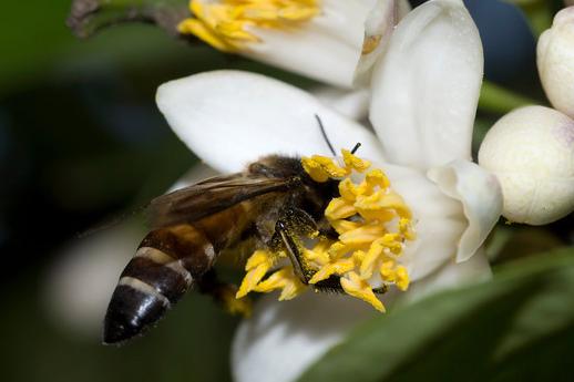 Το ελληνικό μέλι στην γερμανική αγορά