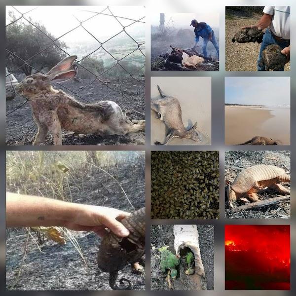 Los animales siguen muriendo en el planeta tierra.