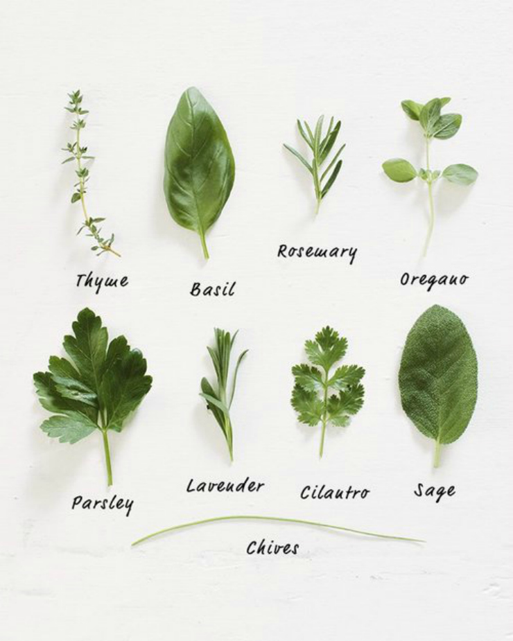 organized leaves / Tumblr blog inspirations