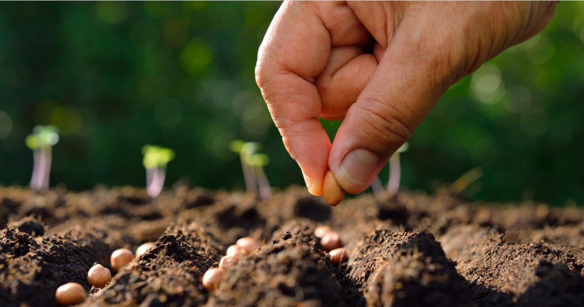 How to Start a Garden for Beginner