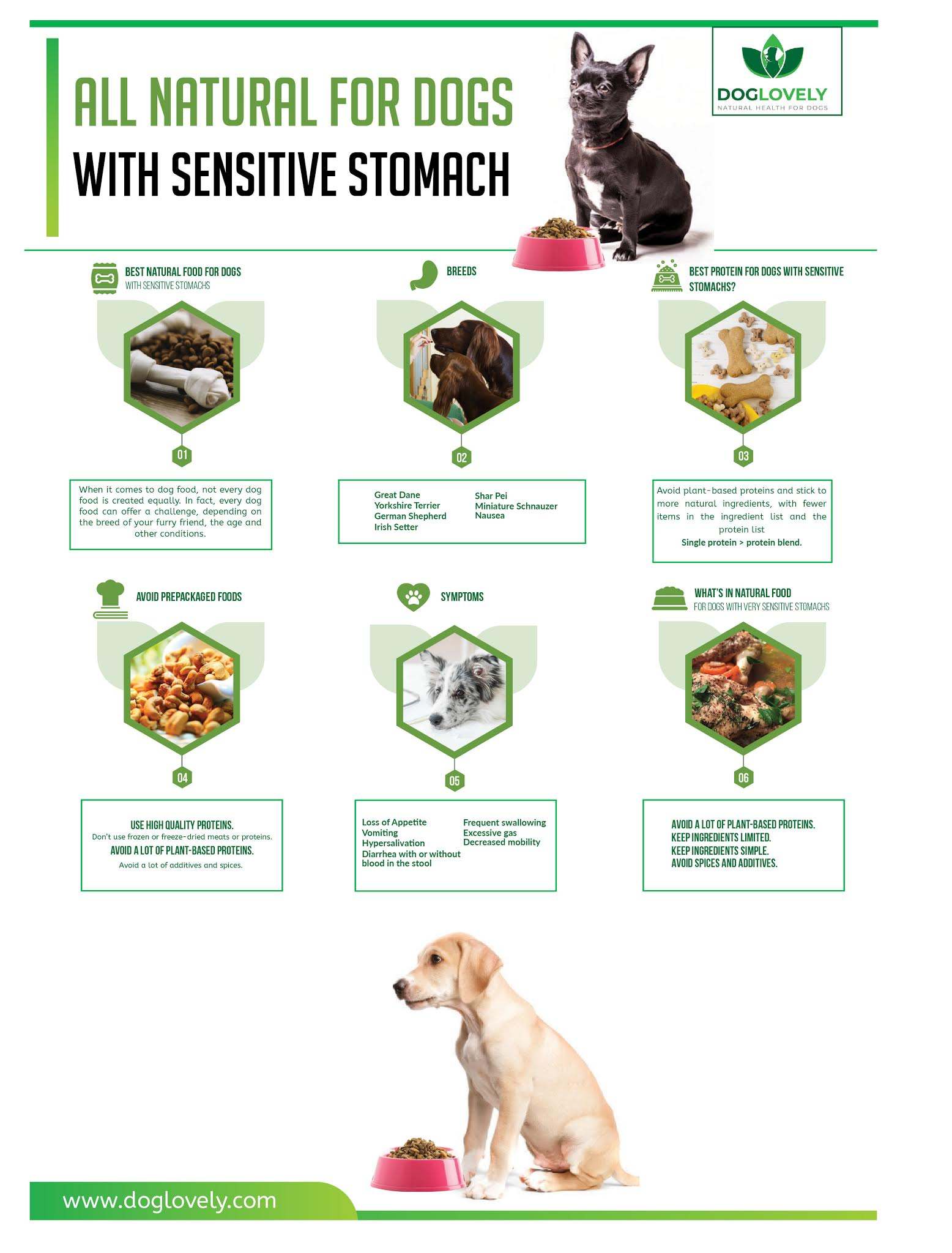 Natural Foods for Dogs With Sensitive Stomach #infographic