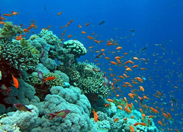 ngắm san hô tại Koh Larn