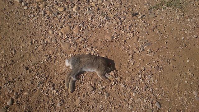 Conejo decapitado