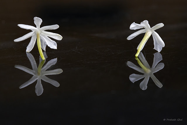 A Minimalist Photograph of Jasmine Flowers and their Reflection on a Glass Table.