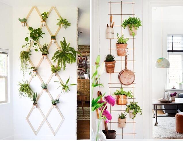 Plantas verticais
