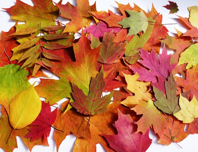 Ancora foglie d'autunno