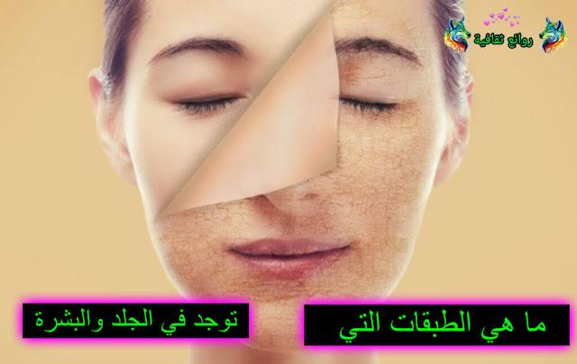 ما هي الطبقات التي توجد في الجلد والبشرة وكل ما يتعلق بالبشرة والجلد