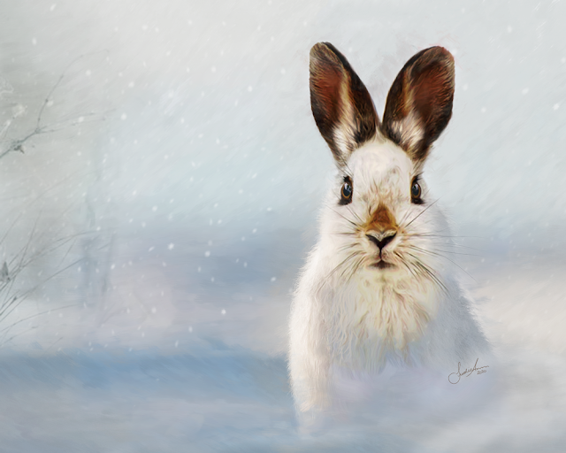 Winter Hare Painting Newfoundland Wildlife Art