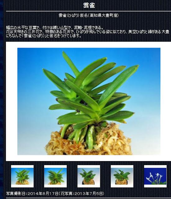 http://www.fuuran.jp/jiman_hibari.html#%E3%81%B2%E3%81%B0%E3%82%8A%E3%81%AE%E8%A9%B3%E7%B4%B0