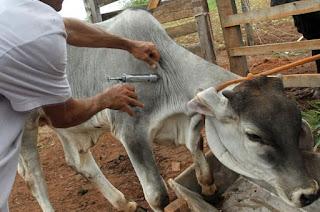 http://vnoticia.com.br/noticia/4575-vacinacao-contra-a-aftosa-prorrogada-ate-30-de-junho-em-sfi