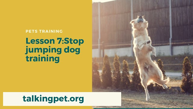 Stop Jumping Dog Training