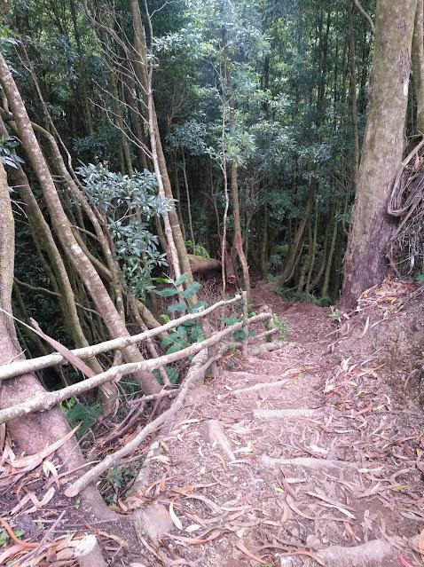 Senda al Salto do Cagarrao (Azores)