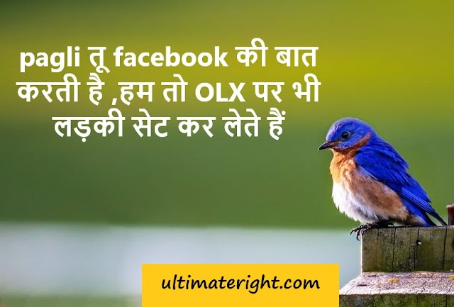 100+ top Best funny shayari message status