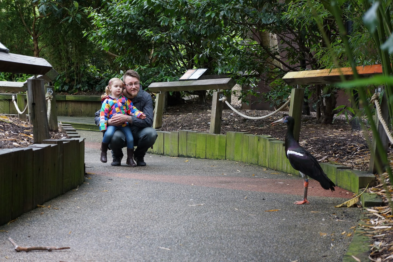 father and daughter watching a bird on a walking path in london zoo
